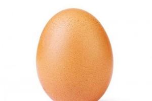 為何無激素雞蛋更健康?